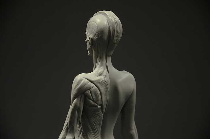 Female Anatomy Figure: Anatomy tool for Artists