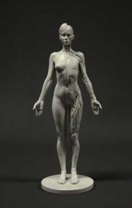 Female Anatomy Figure Anatomical Reference for Artists