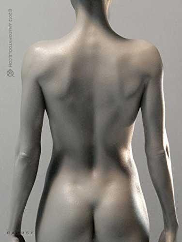 Female Proportional Figure anatomical models tool