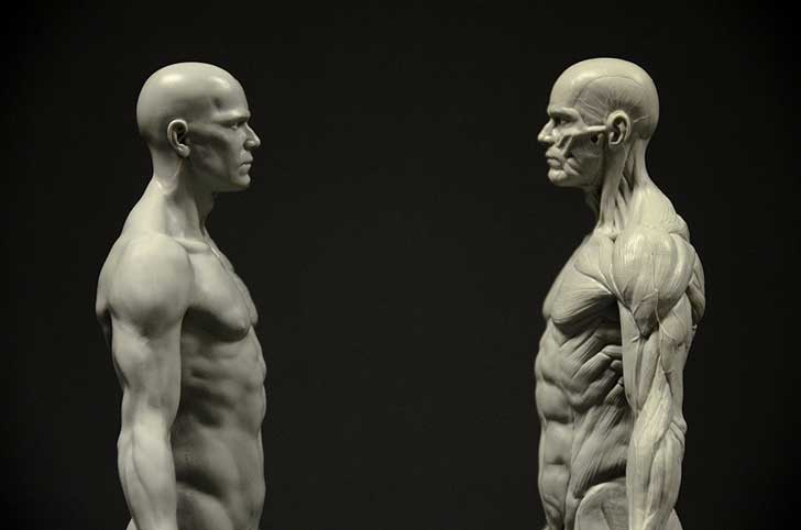 Male Anatomy Figure left and right head profile