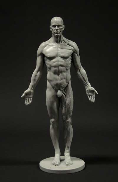 Male Anatomy tool