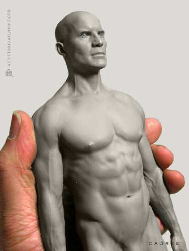 Male Proportional Figure anatomy tools