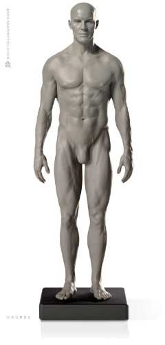 Male Proportional Figure: V.2 - Proportion & Surface Form